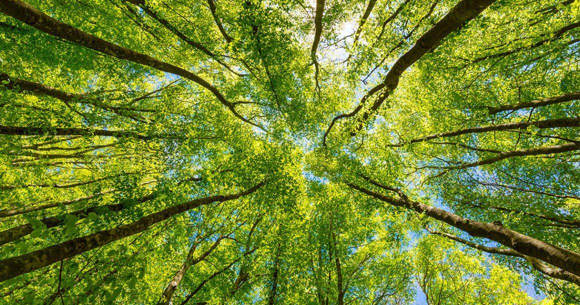 Bosch investește miliarde în măsurile privind clima și calitatea aerului